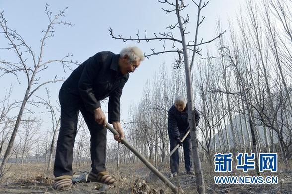 王惠民—自掏腰包守荒山 义务种树十二载