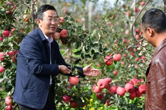 """""""苹果博士""""进田 甜了藏乡百姓"""